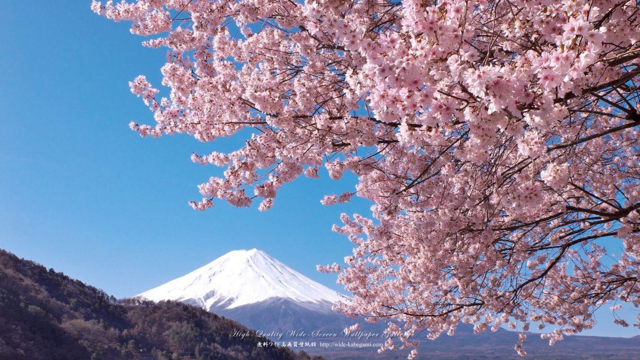 Sakura Wallpaper 1920x1080 1063094 Wallpaperup