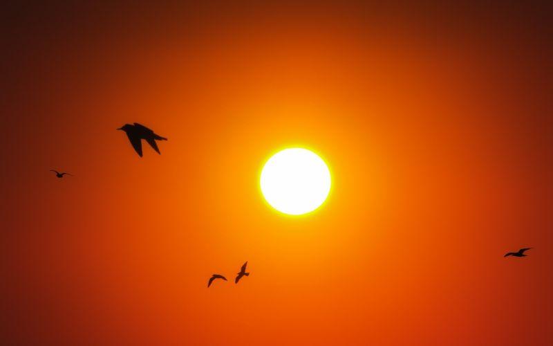 Nature & Landscape sun sky animal birds wallpaper