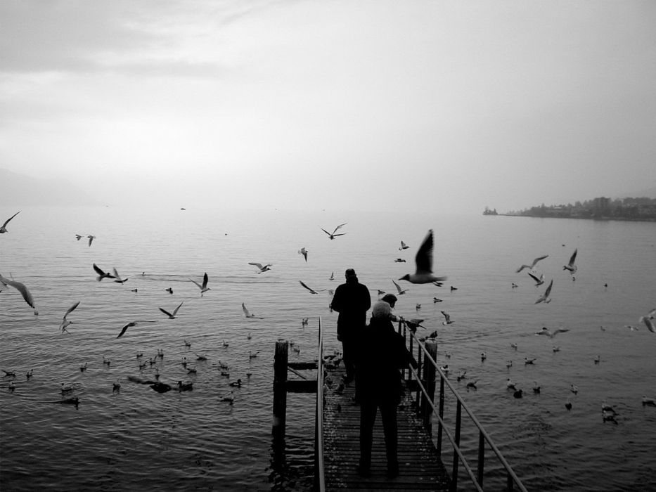 bird bridge bw coast man photography sea seagull sky wallpaper