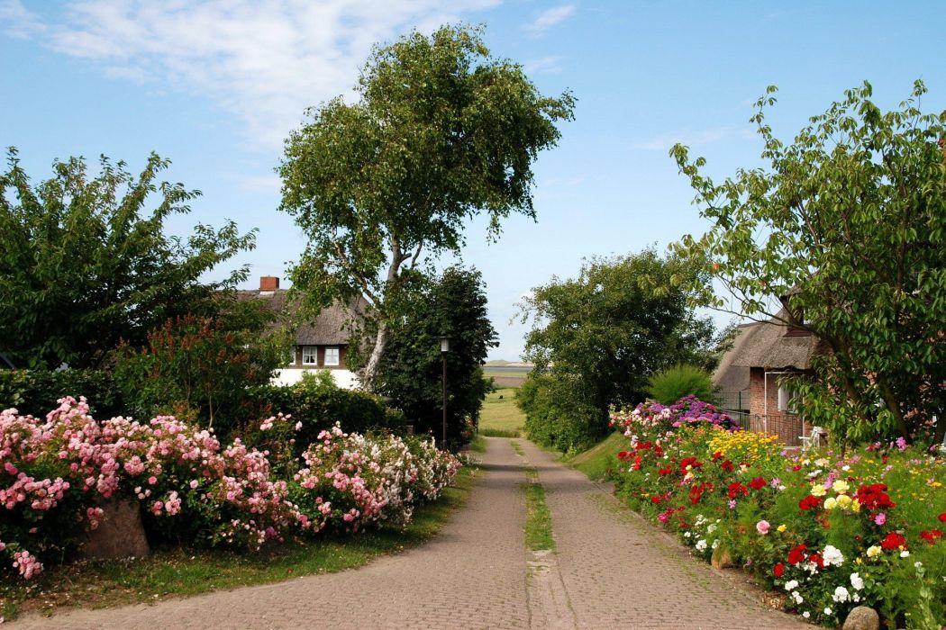 city flower road tree village wallpaper