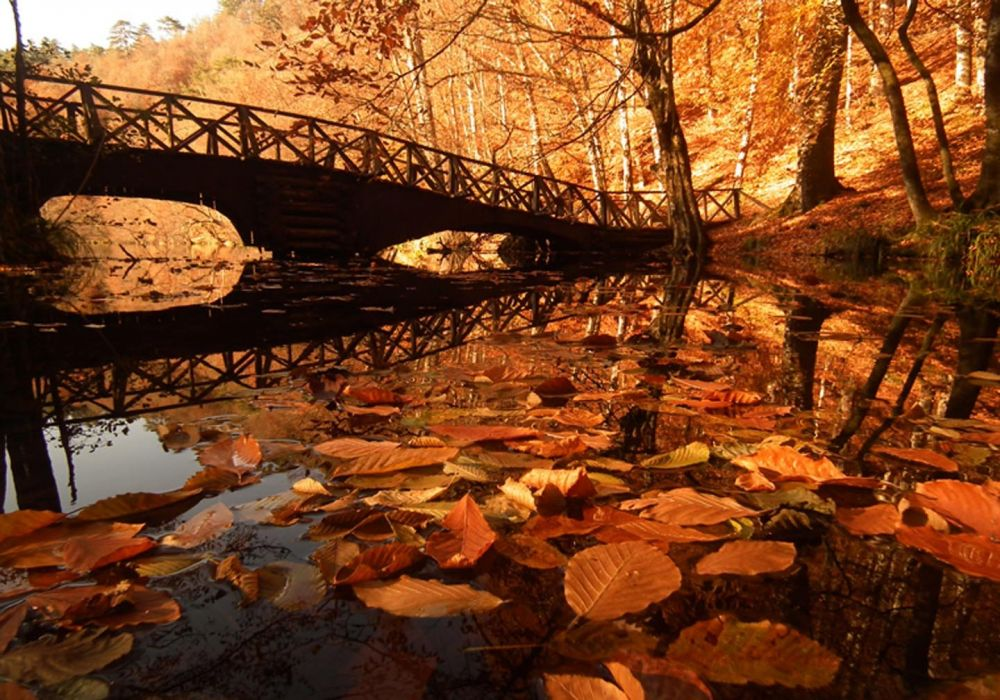 Yedigoller turkey landscape autumn lake river bridge forest tree leaf beauty nature wallpaper
