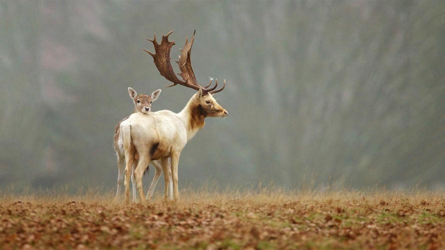 animals baby animals Deer Fawns wallpaper