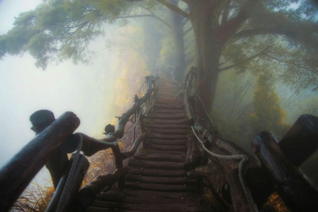 atmosphere bridge forest landscape mist nature path sunrise Trees Wooden Surface wallpaper