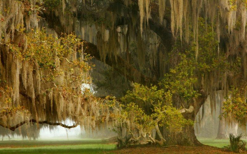 Ancient grass landscape mist nature Oak Shrubs Trees wallpaper