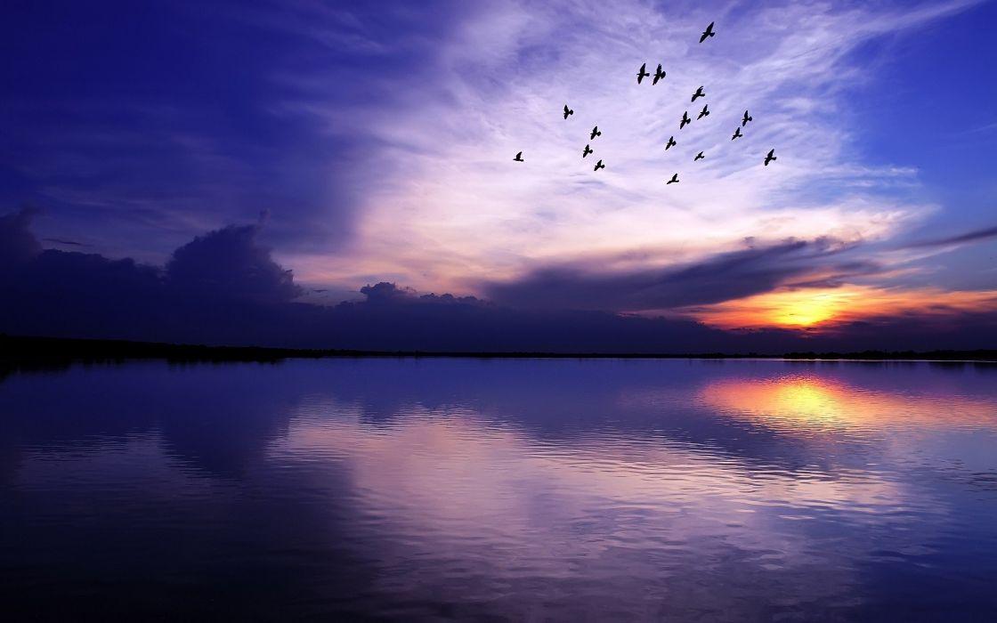 birds lake sea sunset wallpaper