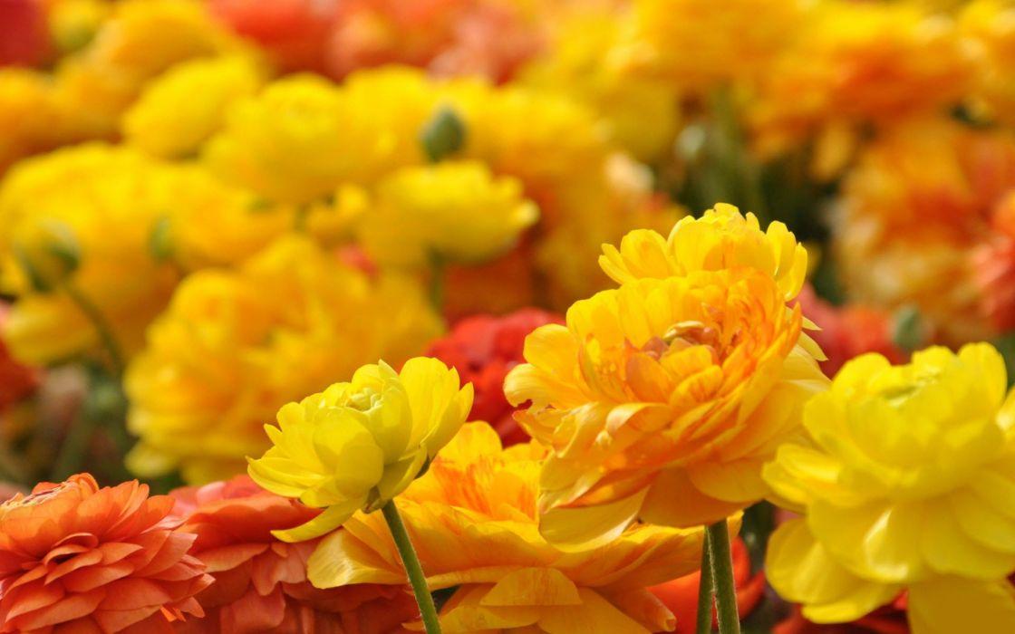 flower beauty nature yellow wallpaper