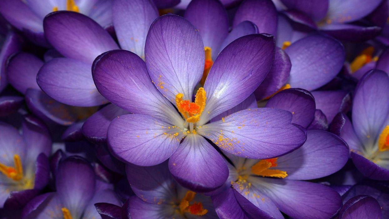 flower beauty nature burble wallpaper