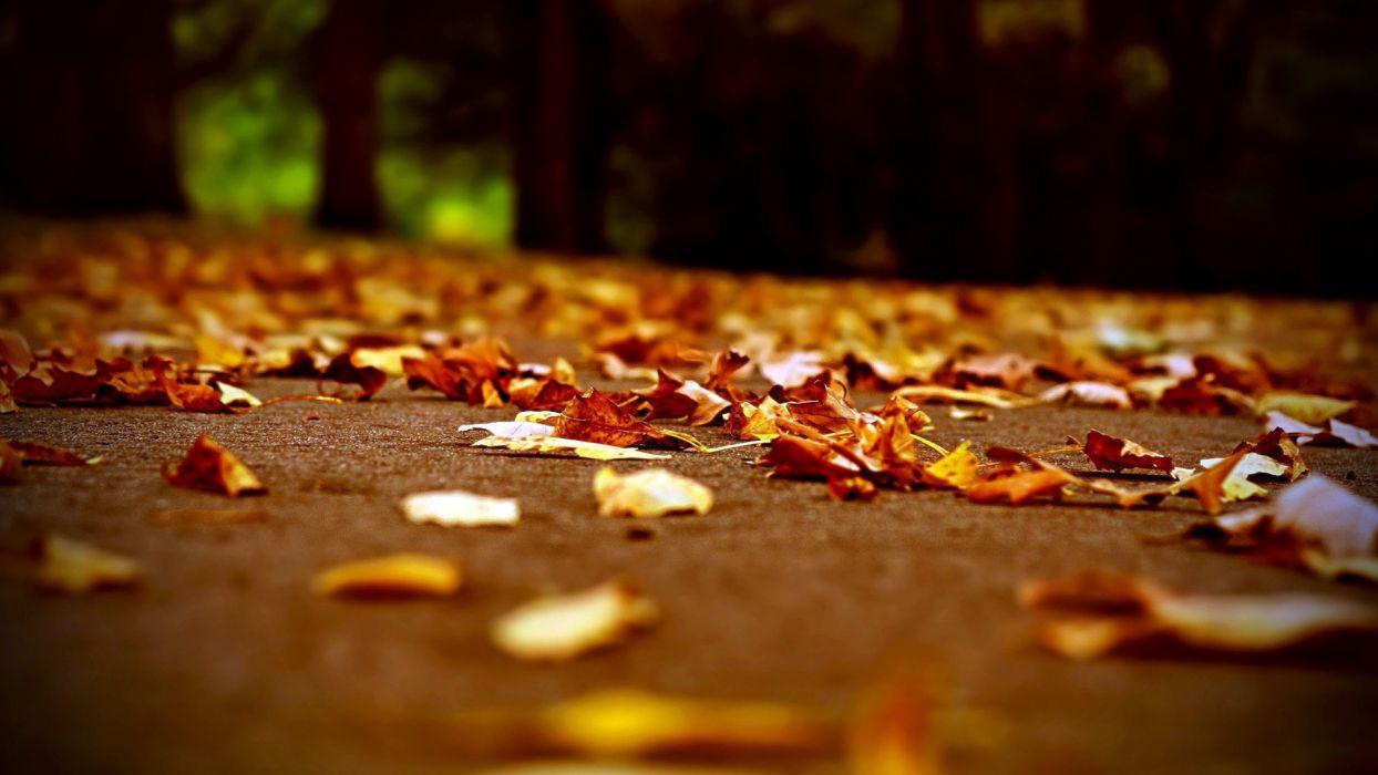 Leaves Autumn Nature Landscape wallpaper