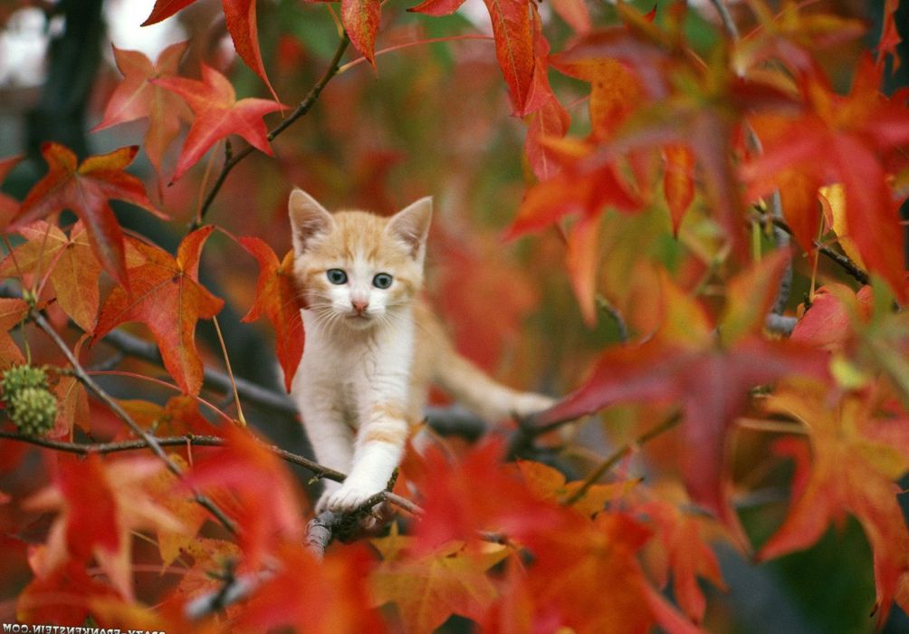 Cat images cat photos cat wallpapers cats cutties feline pictures kittens wallpaper 1600x1116 - Wallpaper pictures ...