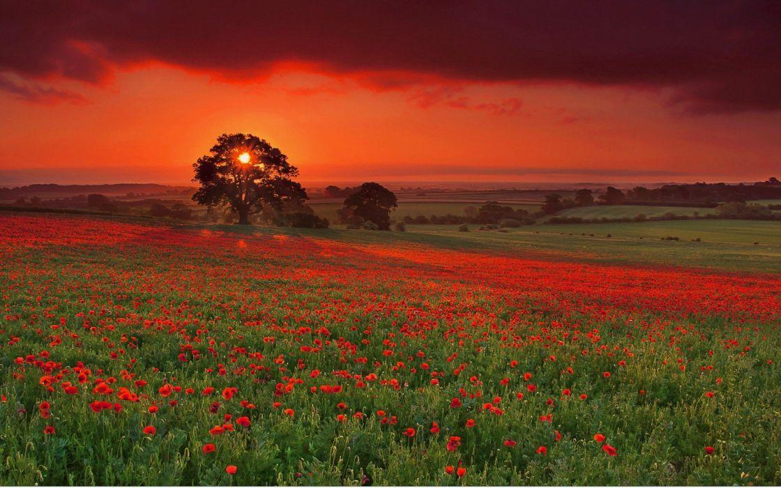 flowers landscape nature sky sunset wallpaper