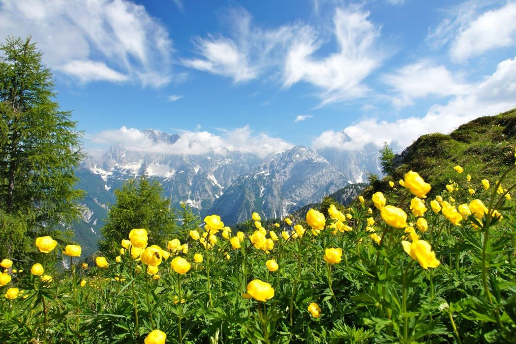 Alps clouds Green Italy landscape mountains nature photography summer Trees Wildflowers wallpaper