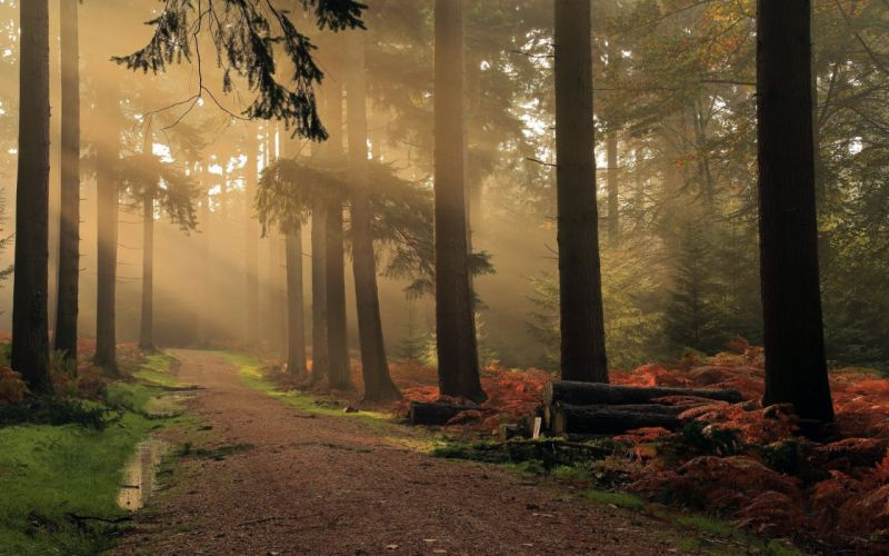 atmosphere Dirt Road Fall forest Hungary landscape mist Morning nature Shrubs Trees wallpaper