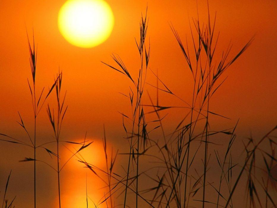 nature Reeds Silhouette sun sunset wallpaper