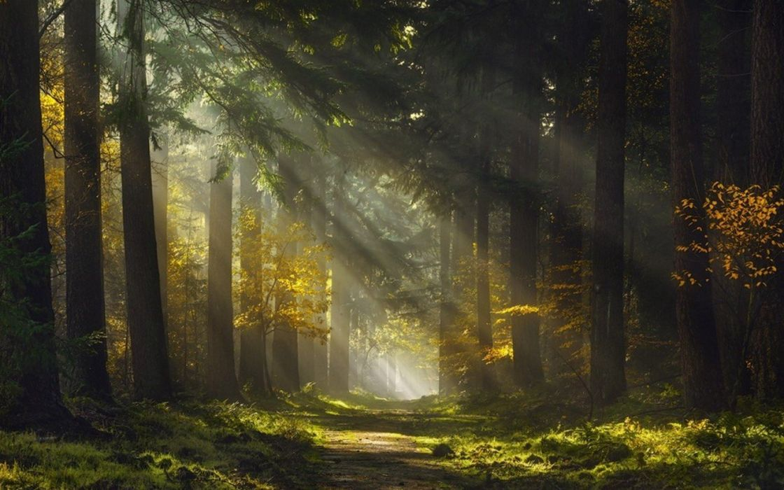 forest grass landscape mist Morning nature path Sun Rays Trees wallpaper