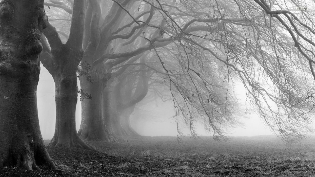 Fog Floating Around The Trees wallpaper