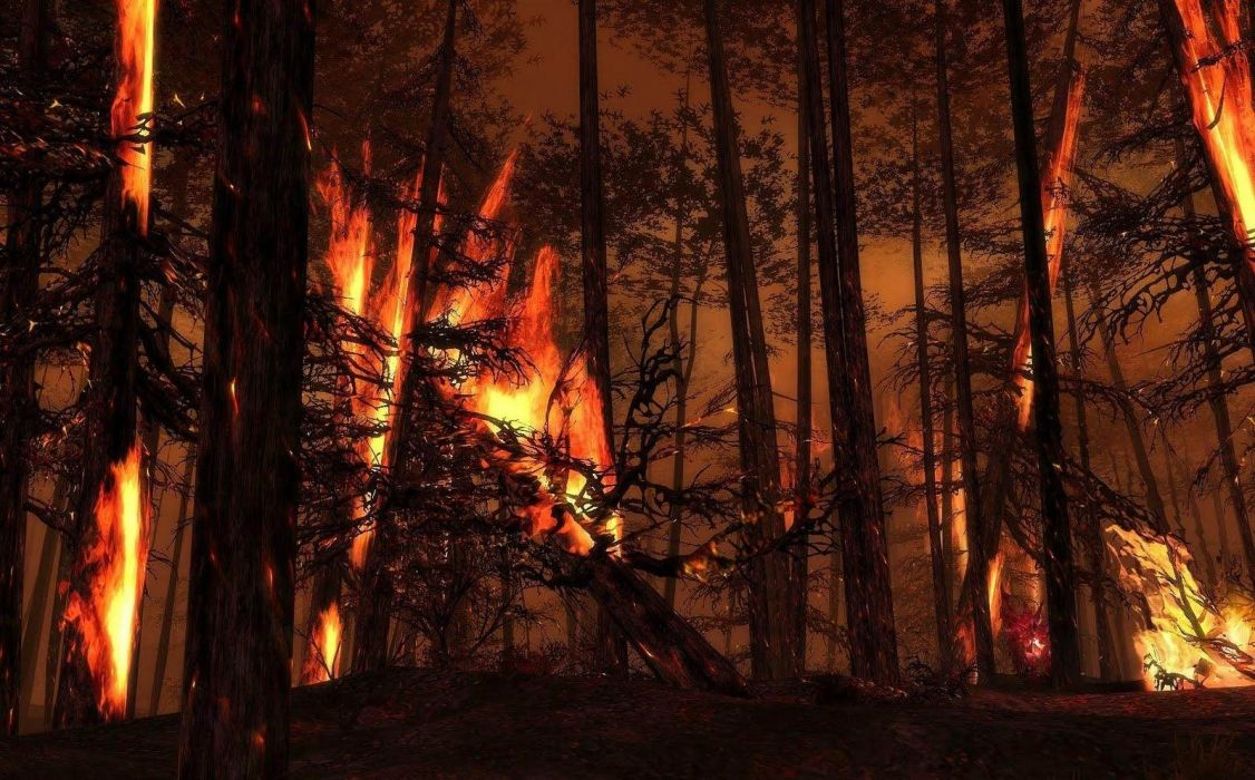 forest burning trees flames wallpaper