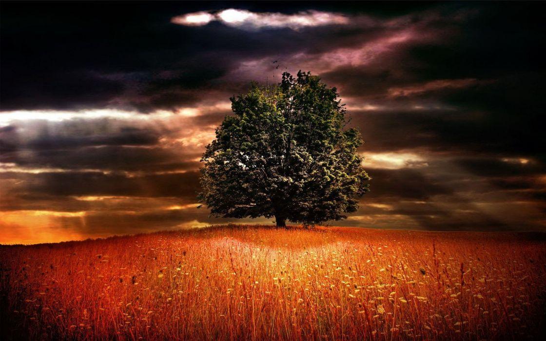 nature beauty tree  wallpaper