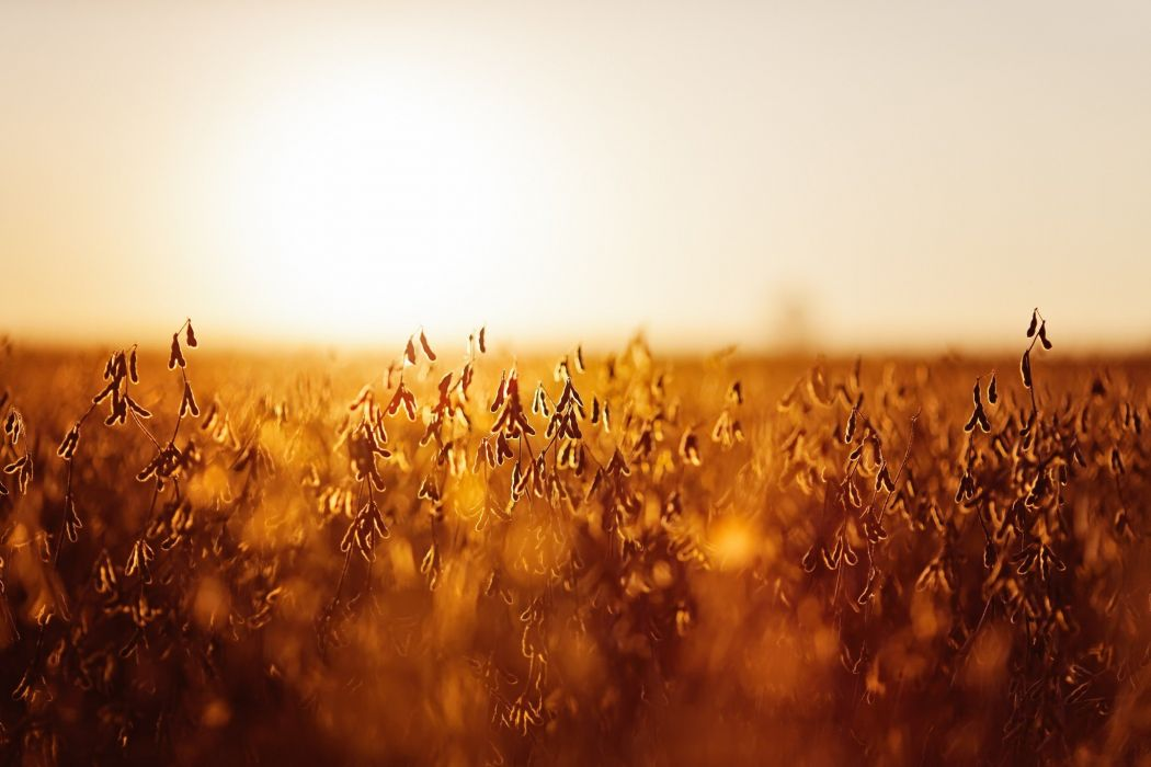 closeup landscape nature sunlight wallpaper