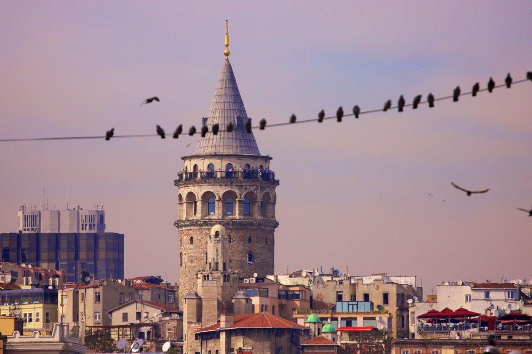 beauty Istanbul Turkey Galata Tower animal birds wallpaper