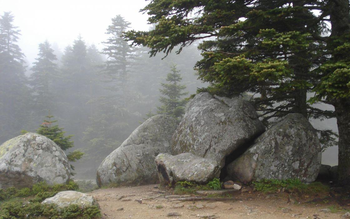 Bursa Uludag beauty fog landscape tree rock mountain wallpaper