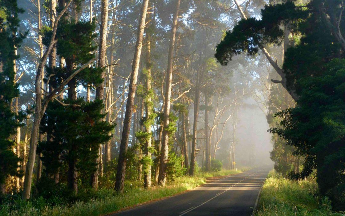 bosque carretera arboles wallpaper