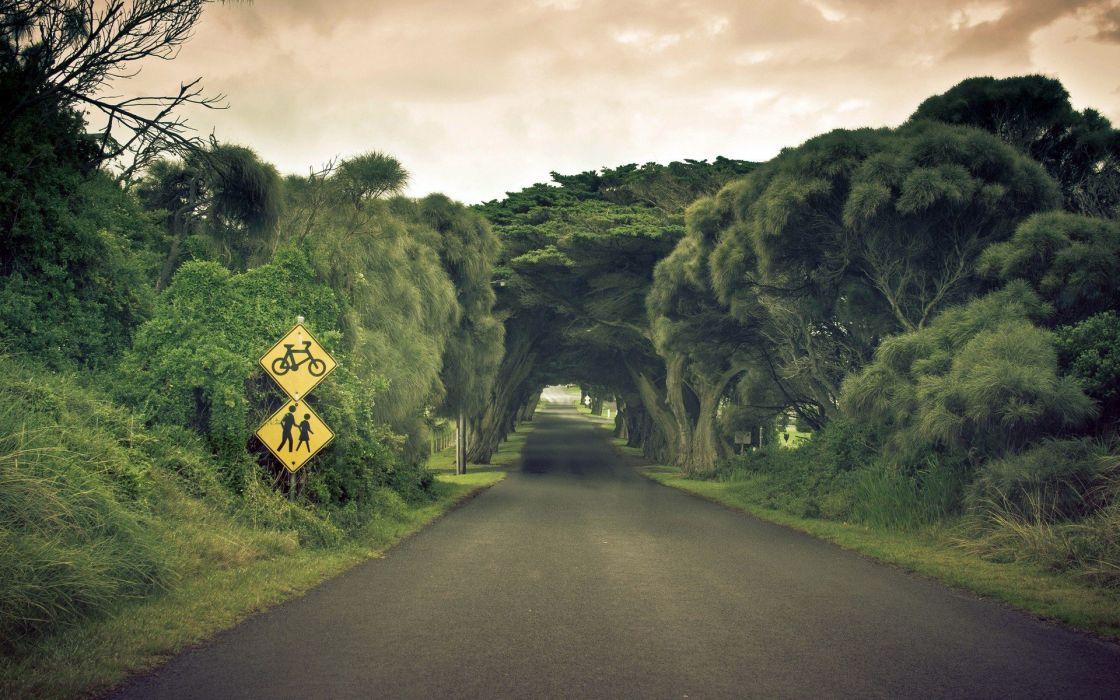 tunel arboles carretera bosque wallpaper