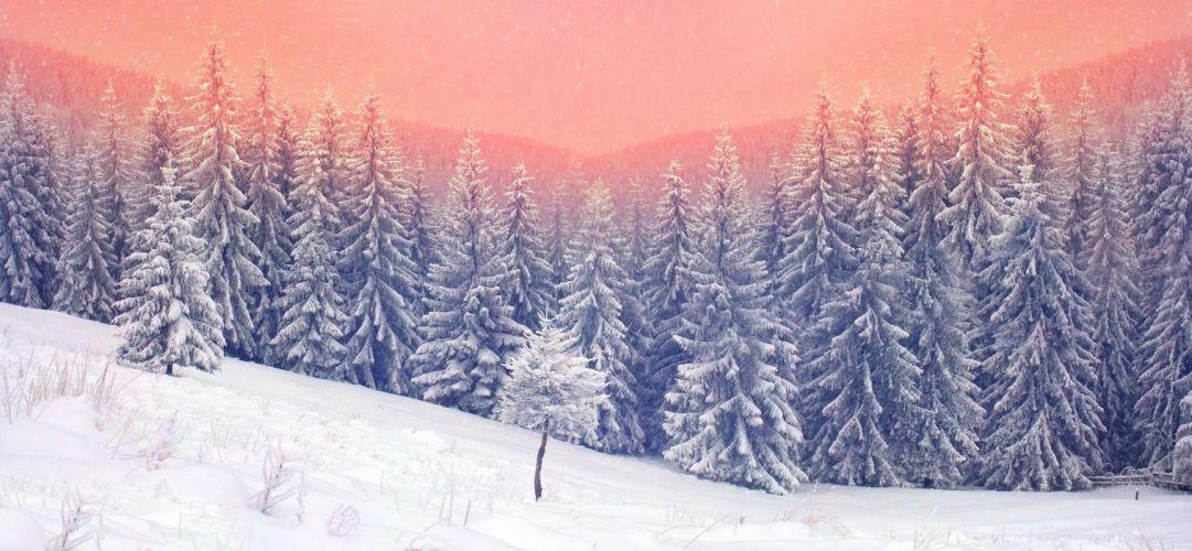 landscape snow trees wallpaper