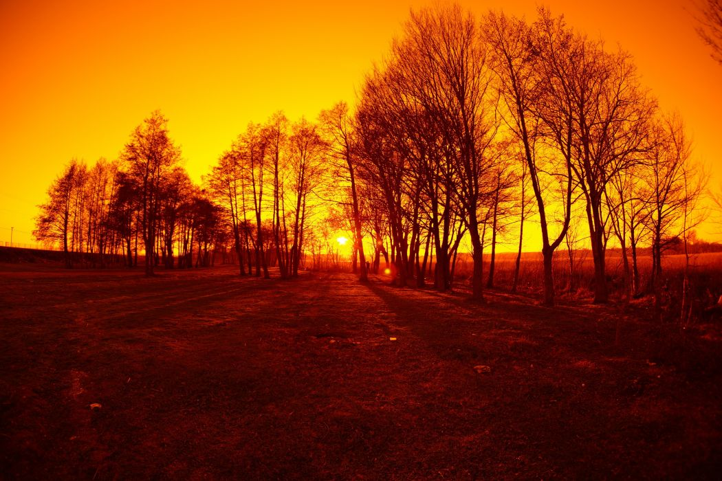 landscape trees Sun wallpaper