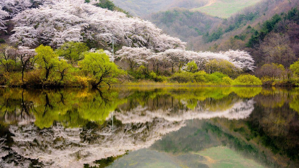 spring landscape Korea hills forest trees flowering lake reflection  wallpaper