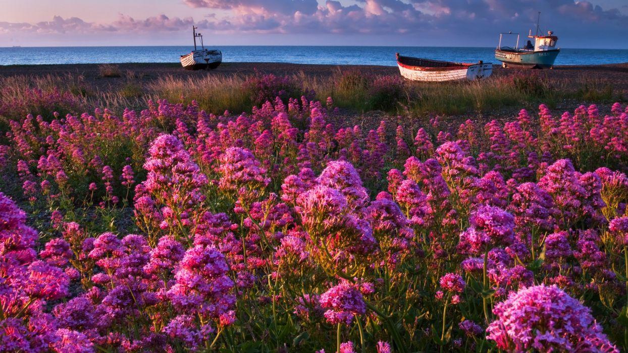 nature spring flowers beach boat sea beautiful  wallpaper