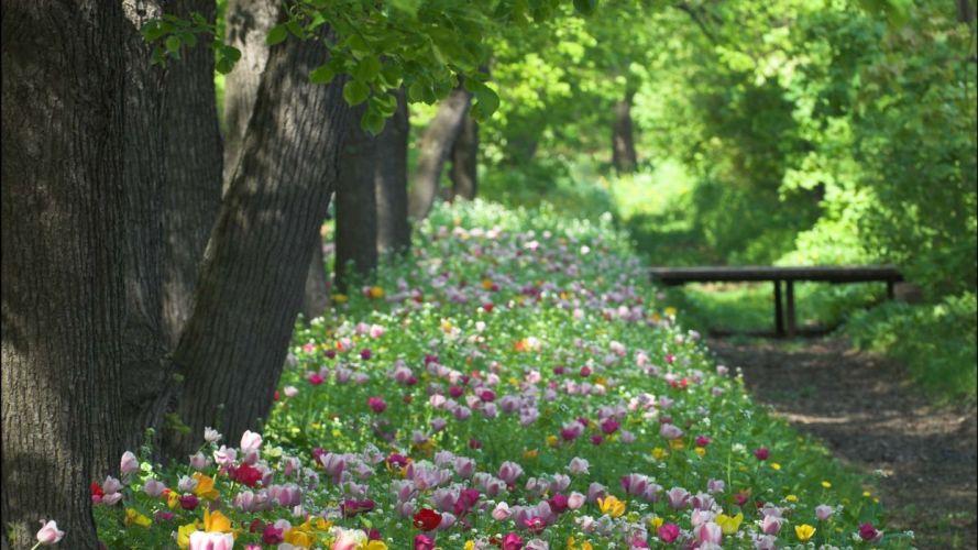 spring park flowers beautiful wallpaper
