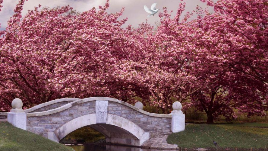 bridge spring park trees flowering wallpaper
