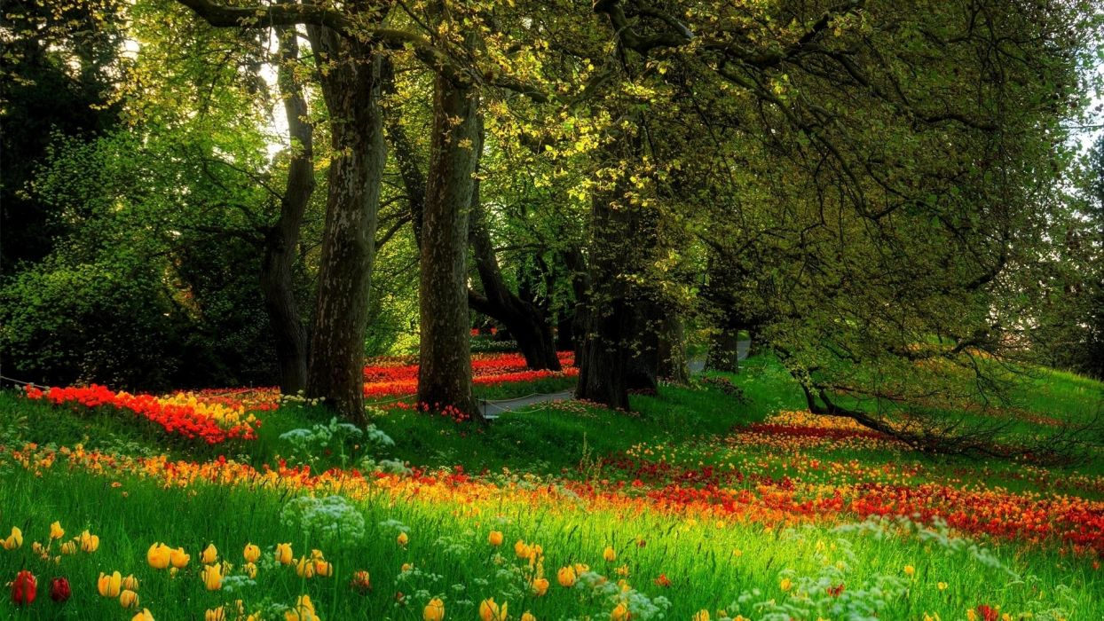 nature park spring beautiful trees flowers tulips  wallpaper