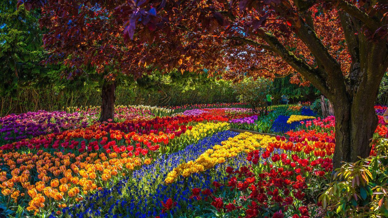 nature park flowers spring beautiful  wallpaper