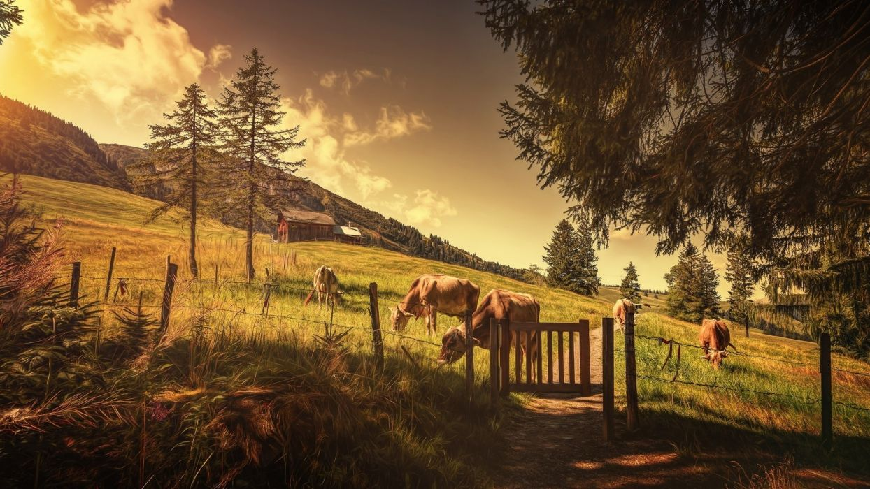 nature cow forest mountain country side sky painting drawing hut grass  wallpaper