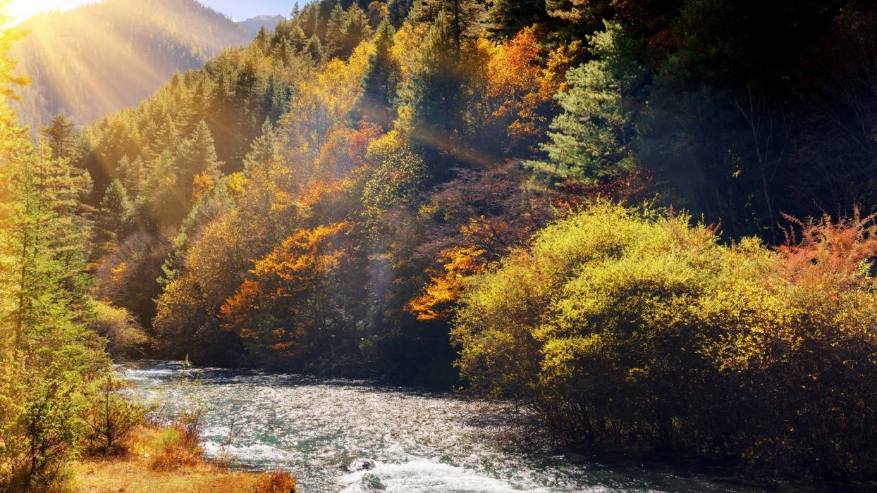 nature river forest rays  wallpaper