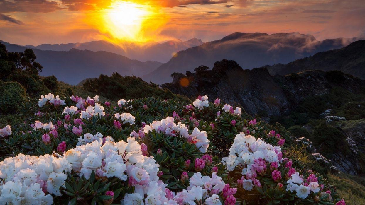 sunset mountains landscape nature flowers  wallpaper