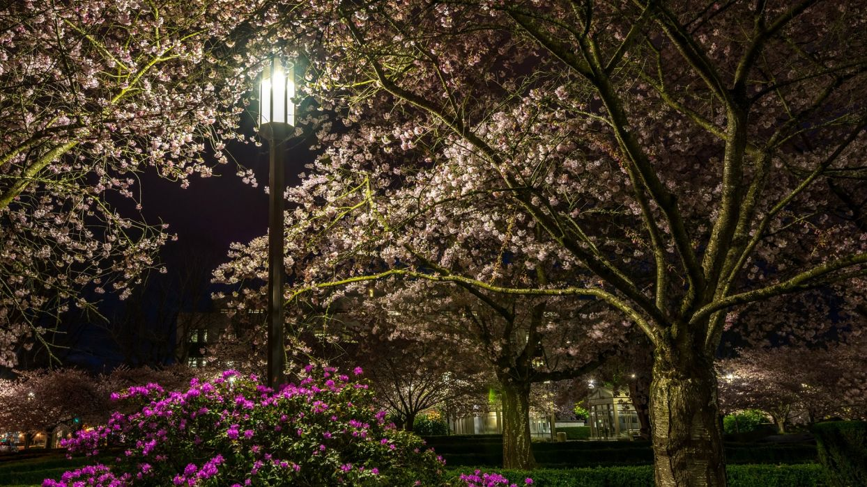 night park lantern blooming trees grass bushes flowers rhododendron spring  wallpaper