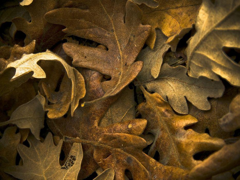 hojas secas naturaleza wallpaper