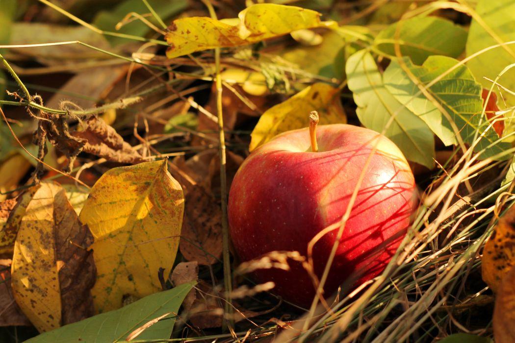 apple autumn fruits leaves wallpaper