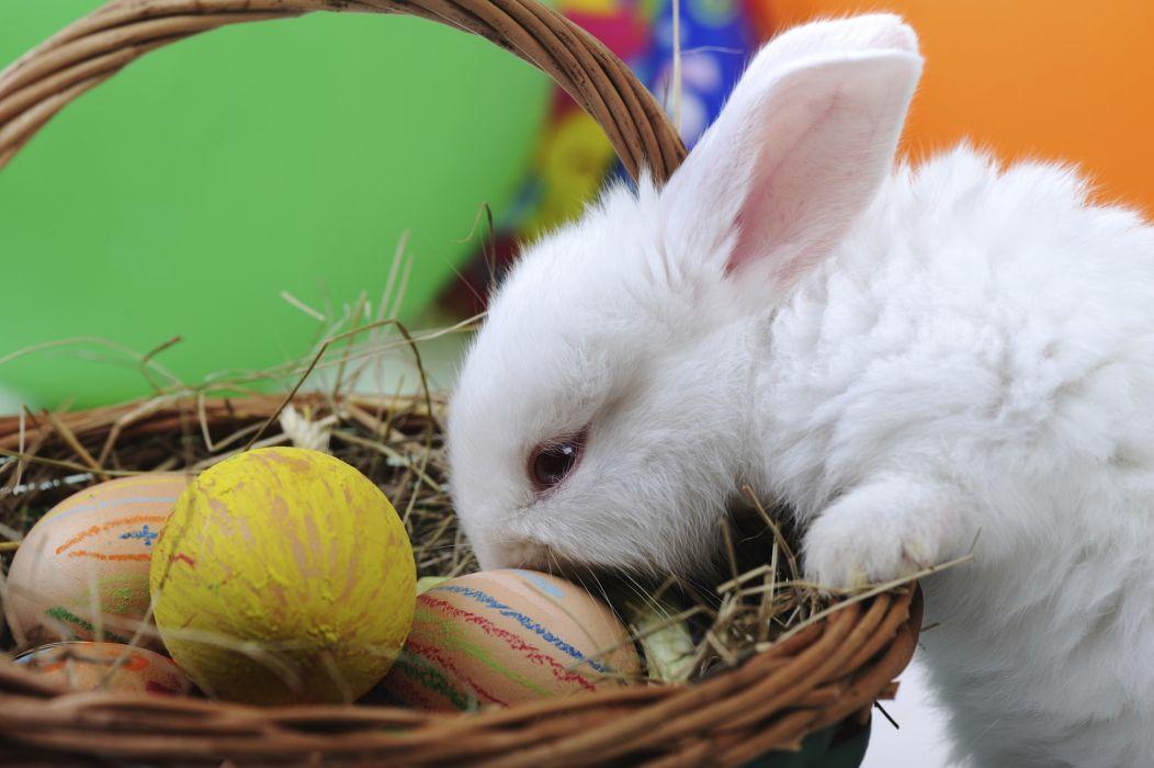 Pascua chocolate conejo huevos wallpaper