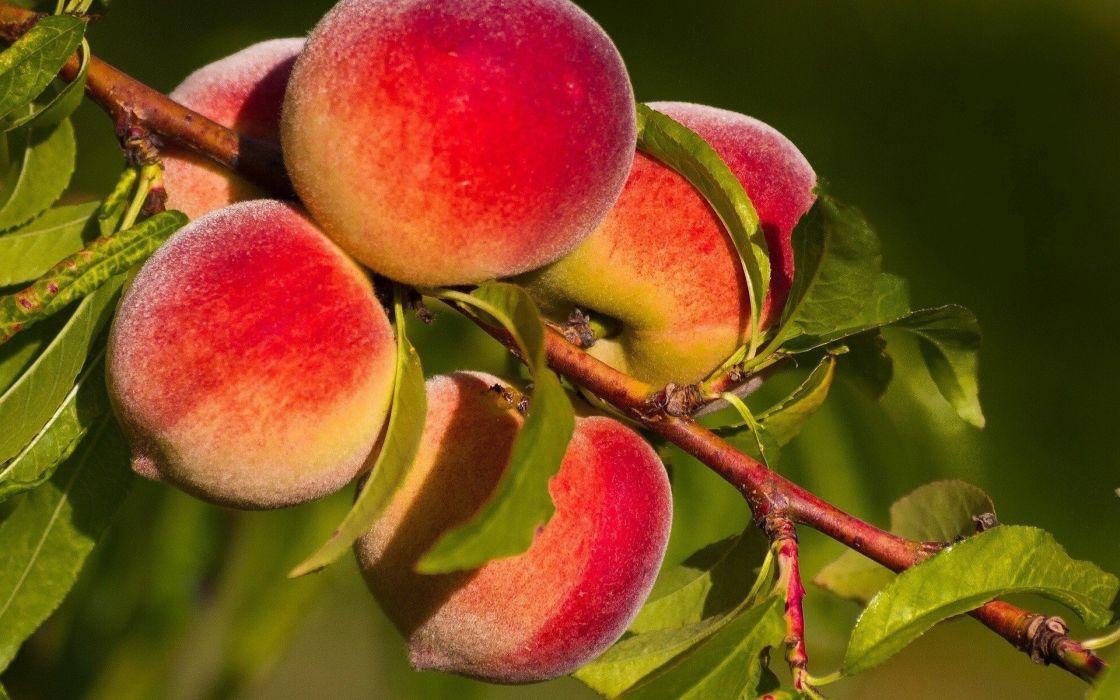 naturaleza melocotones frutas wallpaper