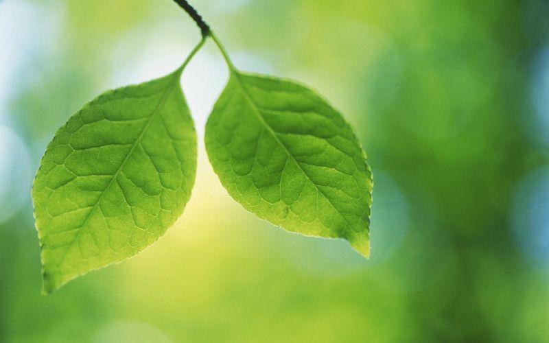 duo hojas naturaleza wallpaper