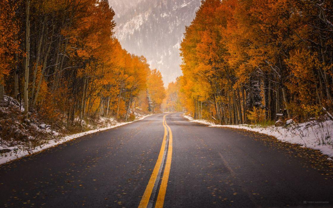 carretera arboles nieve wallpaper
