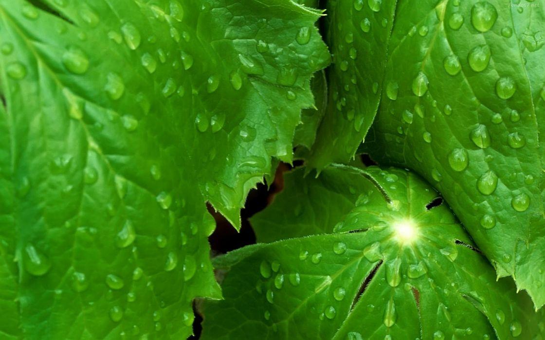 hojas verdes gotas agua naturaleza wallpaper