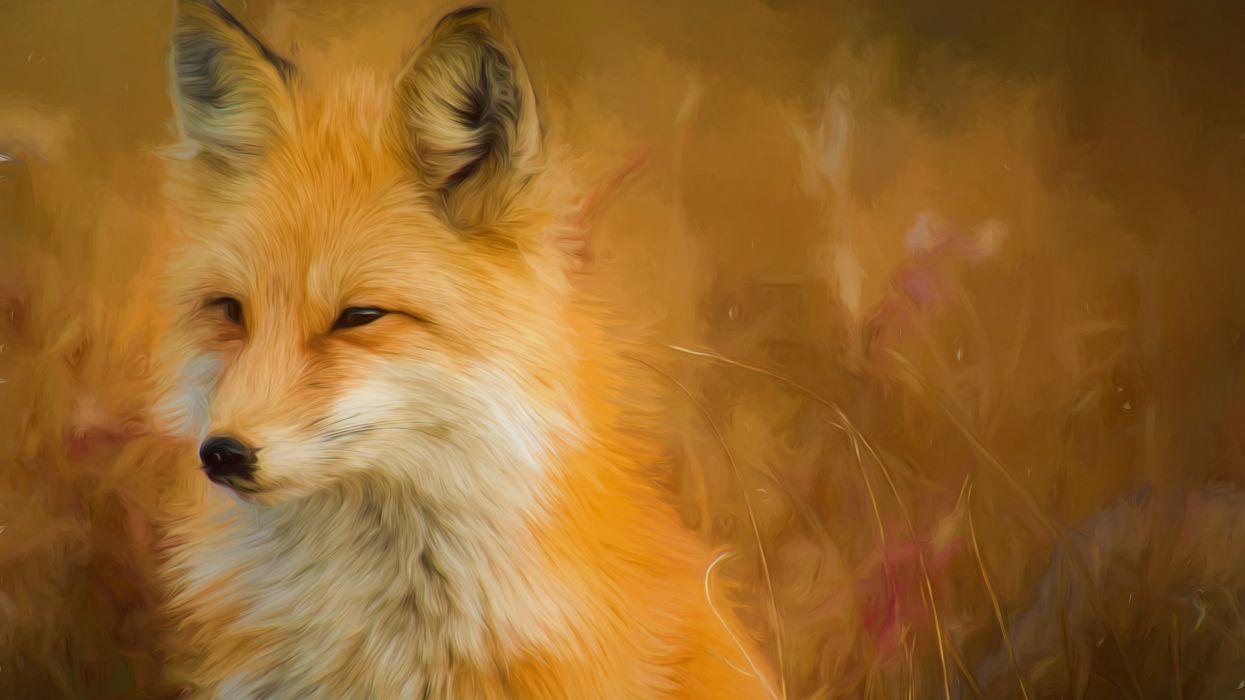 fox paint artwork 5k-5120x2880 wallpaper