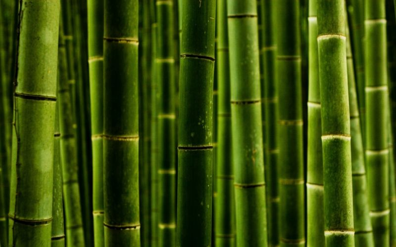 Green wooden stick wallpaper