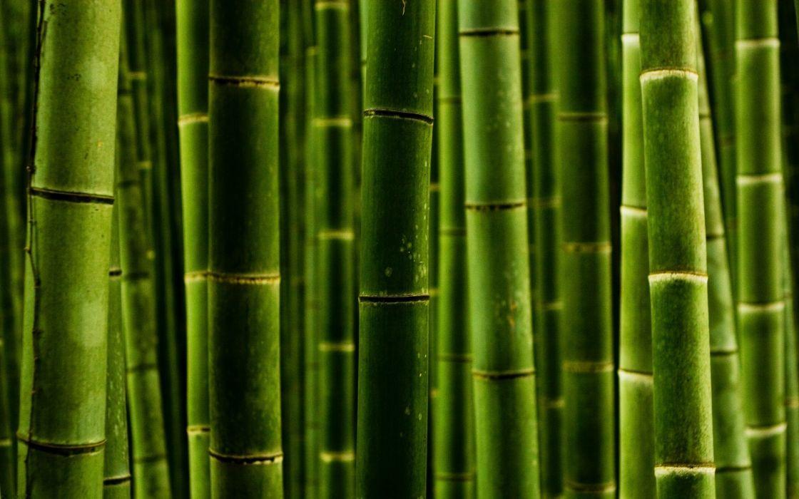Green wooden stick wallpaper