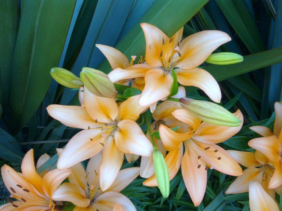 flores naturaleza wallpaper