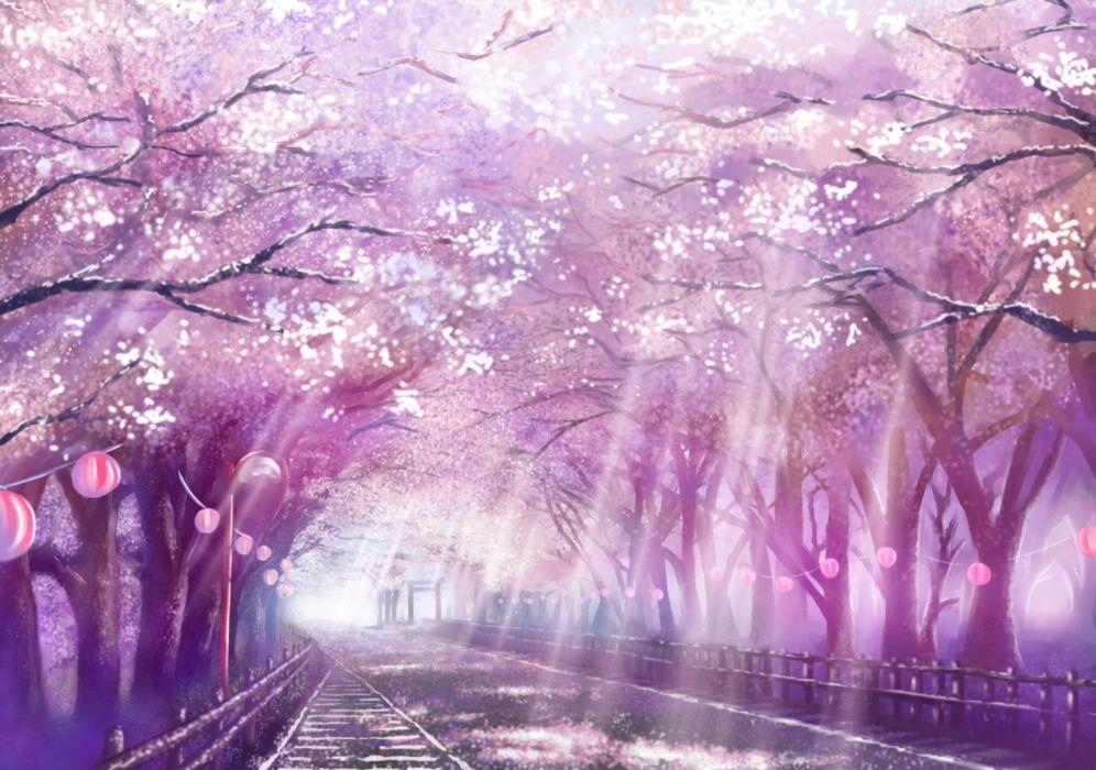 Anime Landscape Scenic Sakura Blossom Cherry Path Sunlight Wallpaper
